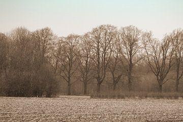 Bomen in de natuur van Melanie Schook