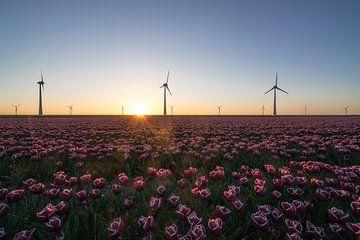 Tulpen en windmolens van Roelof Nijholt