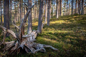 L'arbre mort. sur Marco Lodder