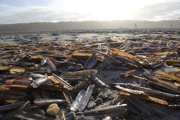 schelpen op het nederlande eiland Ameland  von Joost Brauer