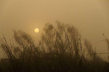 Inle Lake sunrise  van Peter Laarakker