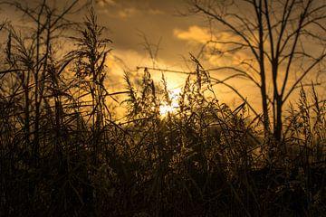 Zonsondergang - Mysterieuze manieren van Rouzbeh Tahmassian