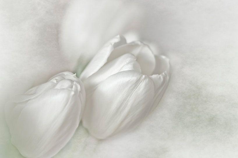 Witte Tulpen van Ellen Driesse