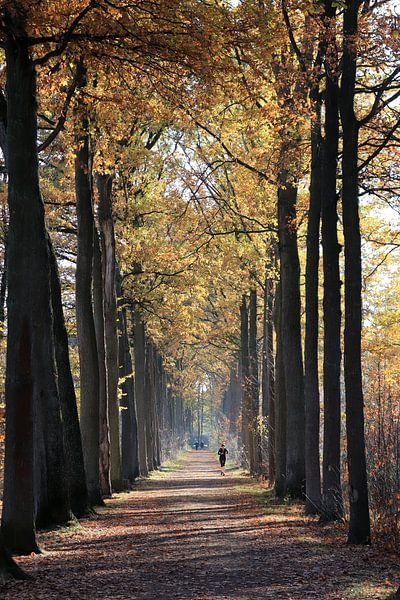 Forest runner van Nina Rotim