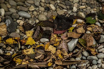Bladeren en de stenen van Christine Nöhmeier