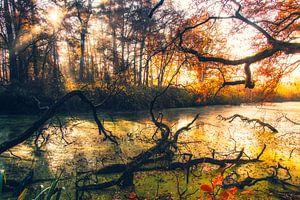 Green River van Sander Rozemuller