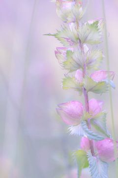 Takje met roze bloemen en groene blaadjes van Esther van Lottum-Heringa