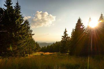 Der Harz von Jeroen Smit