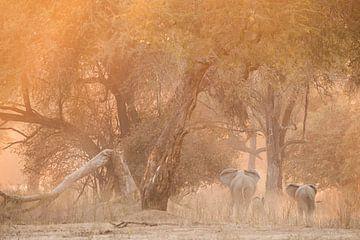 Familie olifanten van Loulou Beavers
