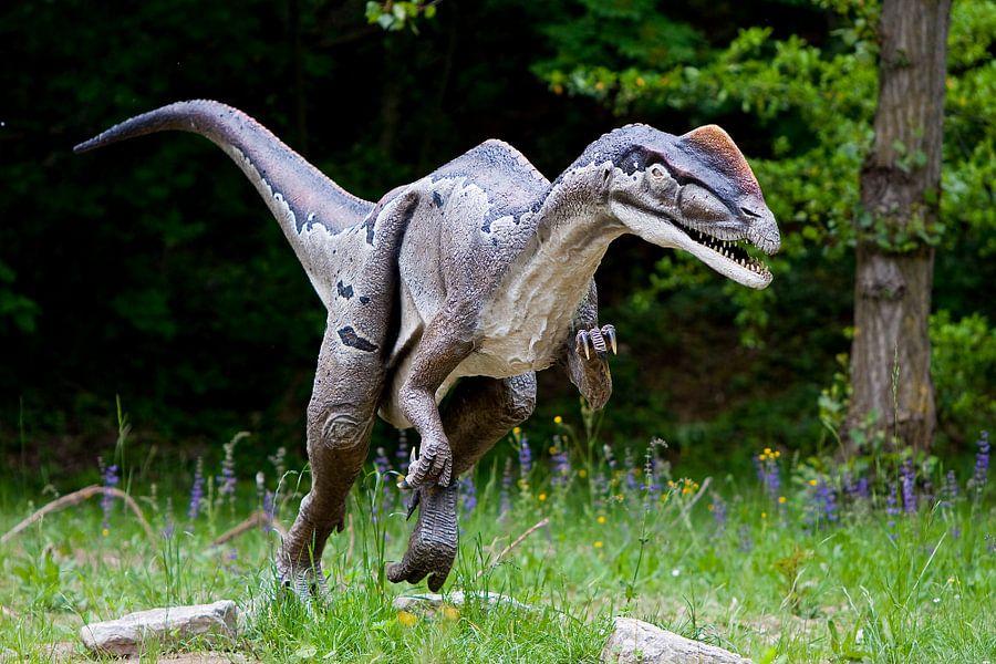 Dinosourus