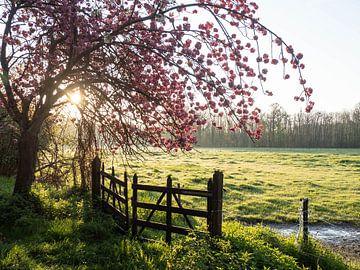 Pink sunrise 2019 deel 2 sur Bart Ceuppens