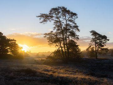 Mistige zonsopkomst op Hulshorterheide van Dennis Mulder