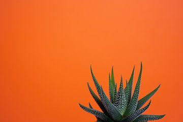 Fettpflanze vor orangem Hintergrund von Marjolijn Maljaars