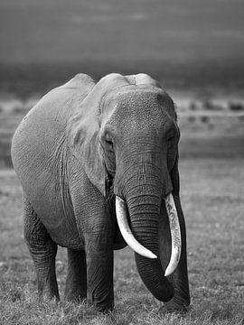 Éléphant à Amboseli, Kenya sur Marije Rademaker