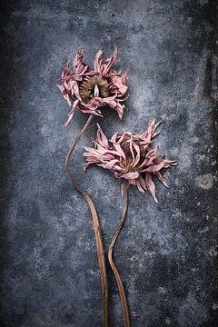 ertrunkene Blumen von Karel Ham