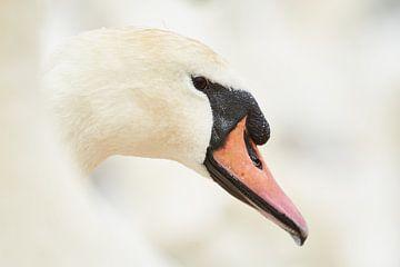Portret van een Zwaan van