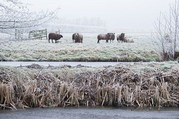 Schapen in winterlandschap sur André Hamerpagt