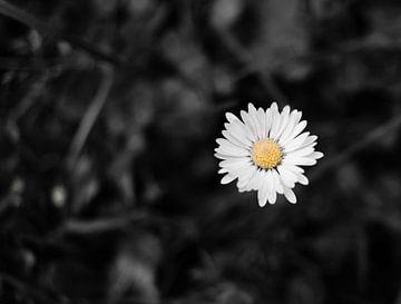 Daisy von wendy van mourik