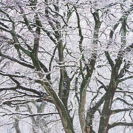 Winter Dans van Joris Pannemans - Loris Photography