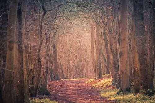 Mysterieus bos von Roland van Tilborg