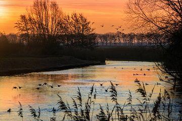 Sonnenaufgang am Bach von Willian Goedhart