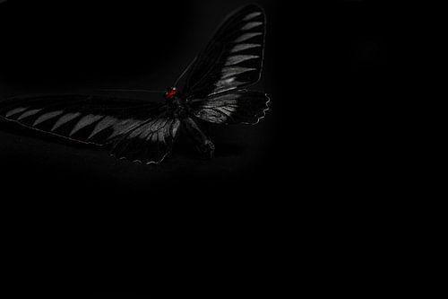 Duistere vlinder van