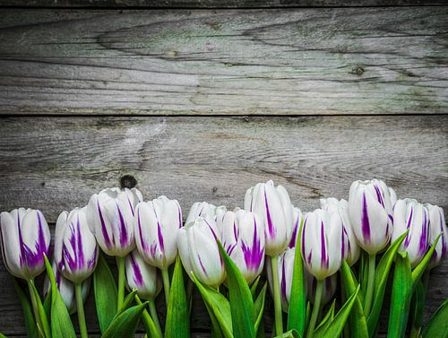wit-paarse tulpen voor een witte achtergrond van Beeldig Beeld