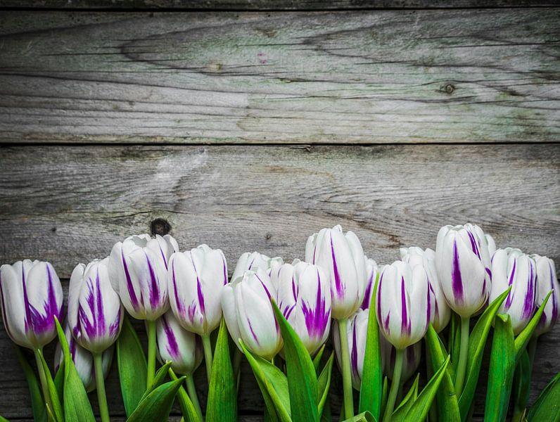wit-paarse tulpen voor een witte achtergrond van BeeldigBeeld Food & Lifestyle