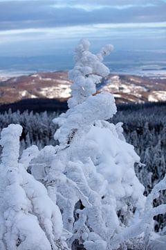 Uitzicht vanaf de Leistenklippe (Harz) van t.ART