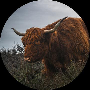 Schotse hooglander op een bewolkte dag van Jan Willem De Vos