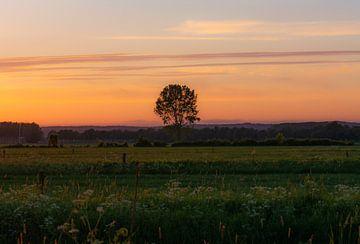eenzame boom van Tania Perneel
