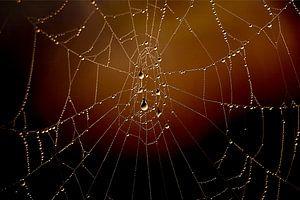 Spinnenweb met dauwdruppels van G. Tiemens