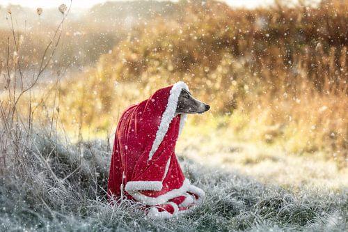 Kerst hond!