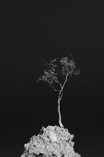 Eenzame boom op heuveltop