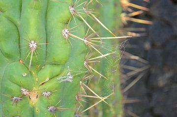 Cactus in Lanzarote von Annabel van Wensveen