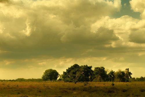Paysage de lande et vieux chênes par une journée d'été