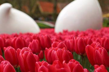 De tulpen in bloei van jorrit Verduijn