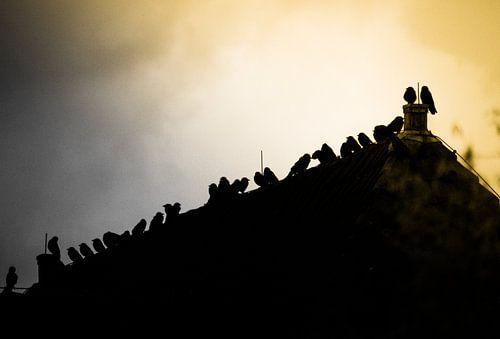 De Vogeltjes bij zonsondergang
