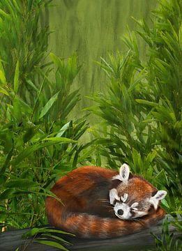 Styan's rode panda, Ailurus styani van Urft Valley Art